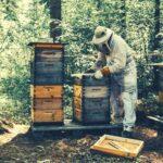 Дезинфекция ульев и инвентаря пчеловода