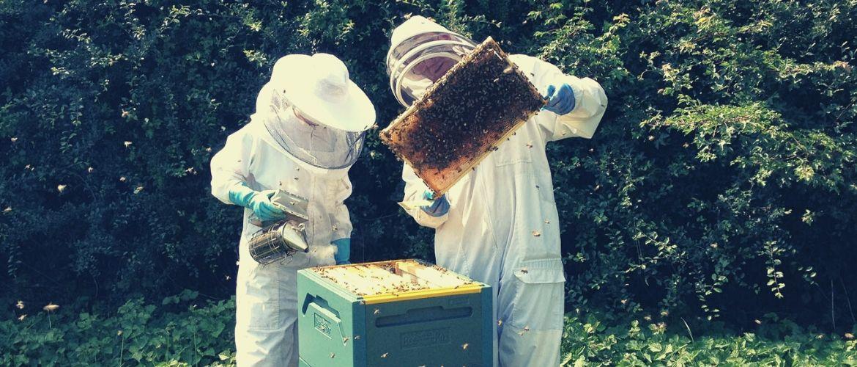 Амитраз для пчел и препараты на его основе