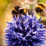 Про пчел и их отличия от других насекомых