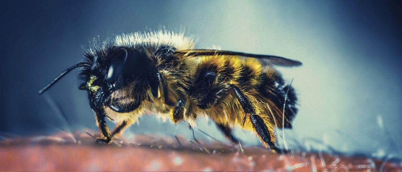 Породы пчел с фото и описанием: лучшие виды для каждого региона