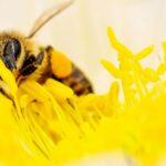 Как избавиться от пчел диких или соседских на своем участке