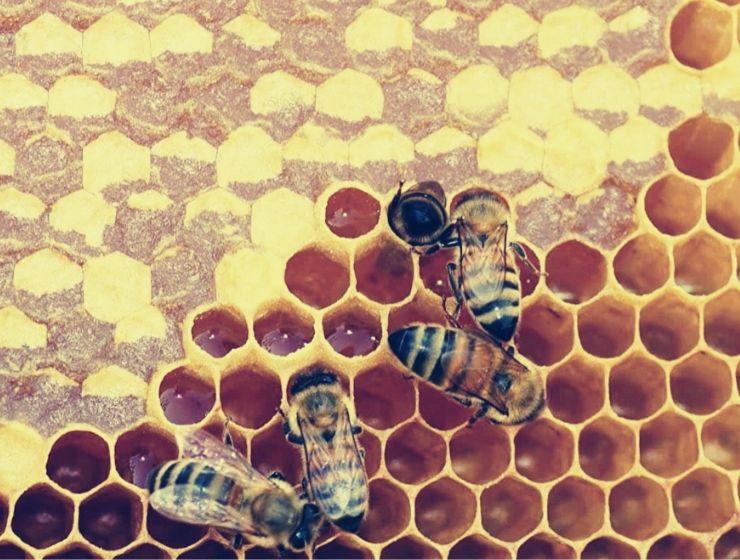 Пчелиные соты: как пчелы из строят и почему они шестиугольные