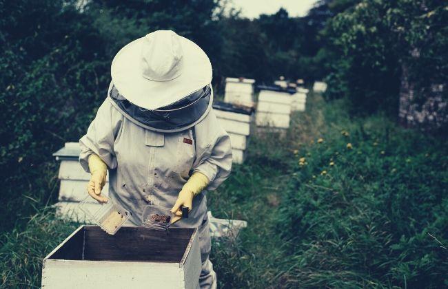 Породы и виды пчел с описанием и характеристикой