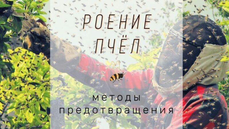 Роение пчел методы борьбы и как предотвратить