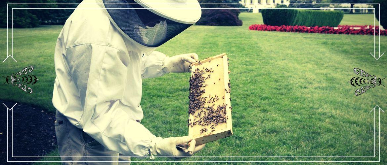 Улей Удав Владимира Давыдова: размеры,чертежи и особенности содержания пчёл