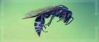 Яд бразильской осы