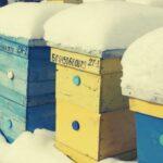 как подготовить пчел к зиме