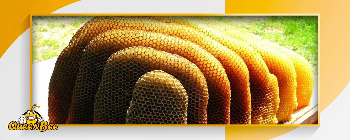 Дикий бортевой мёд полезные свойства