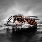 Где зимуют осы в дикой природе