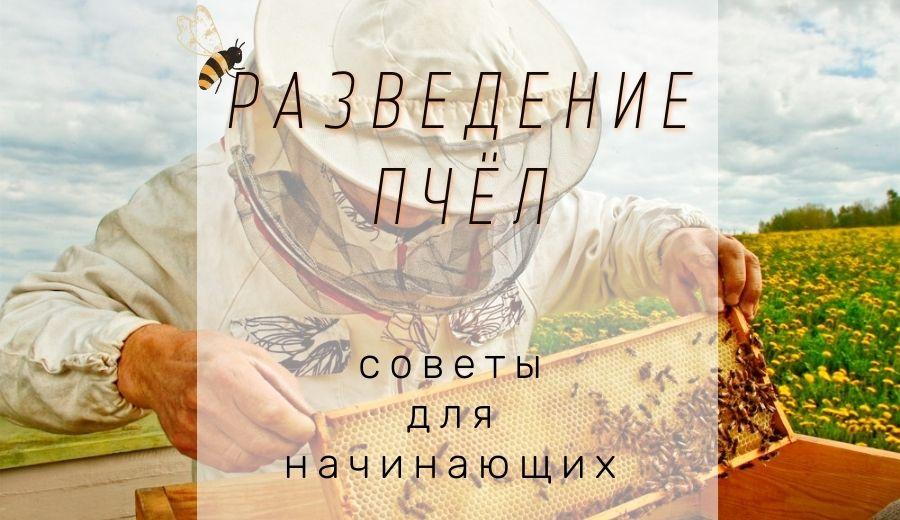Как разводить пчел и ухаживать за ними: советы для начинающих пчеловодов