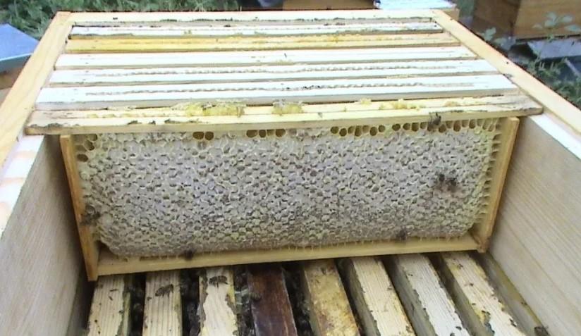 Вот так и выглядит рамка удава. Пчелам обживать ее просто.