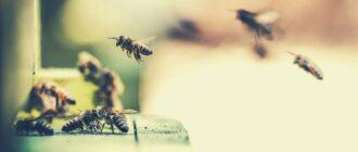 готовим канди для пчел