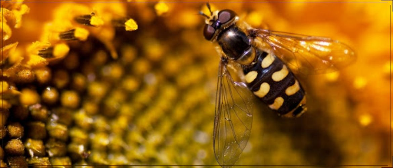 делают ли осы мед и каков на вкус