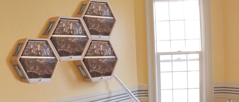 Прозрачный улей для наблюдения за пчелами или мини пасека в квартире