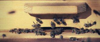 Пчеловодство 2020 - как начать разводить пчел без опыта