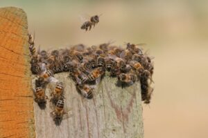 Почему пчелы роятся