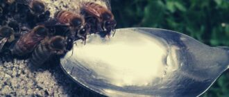 Чем кормить пчел весной и зачем.