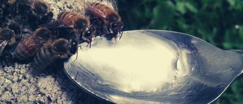 Подкормка пчел весной: белковая, стимулирующая, побудительная: рецепты и пропорции