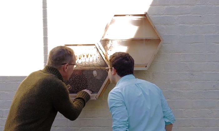 Прозрачный улей для наблюдения за пчелами с модульной конструкцией