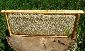 Полноценная рамка с мёдом выглядит вот так