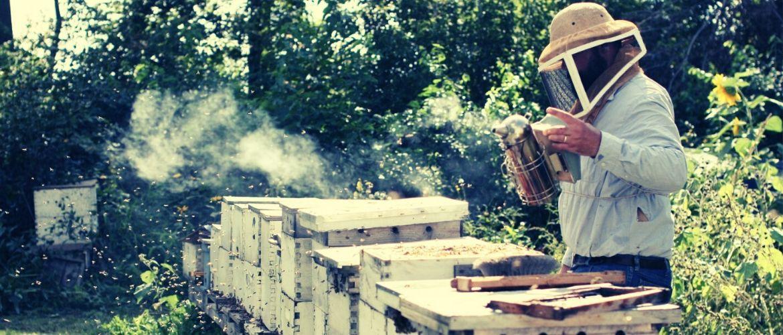 щавелевая кислота для пчел отварроатоза