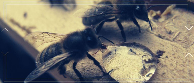 Подкормка пчел сахарным сиропом на зиму в пакетах