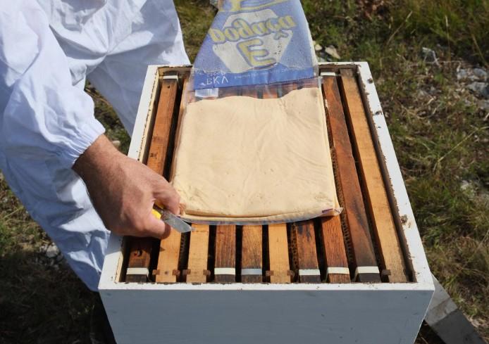 Как давать сахарное тесто пчелам