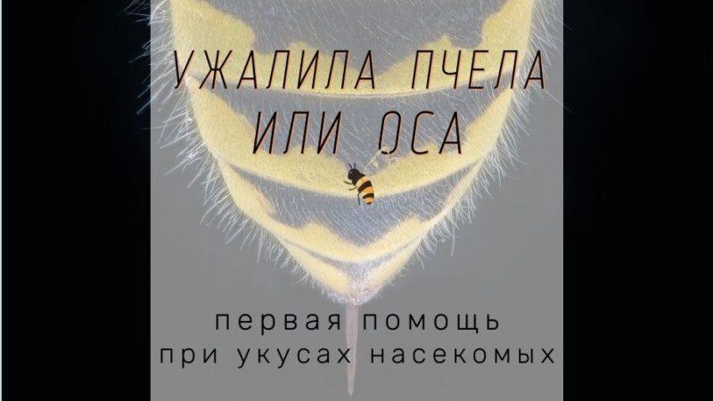 что делать если ужалила пчела. первая помощь при укусе.