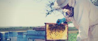 Главный весенний осмотр пчел