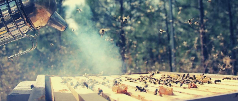Дымарь для пчел: что класть и как разжечь