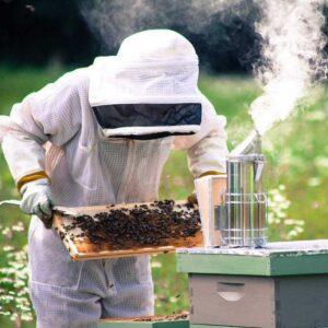 Немного дыма помогут спокойнее работать с пчелами.