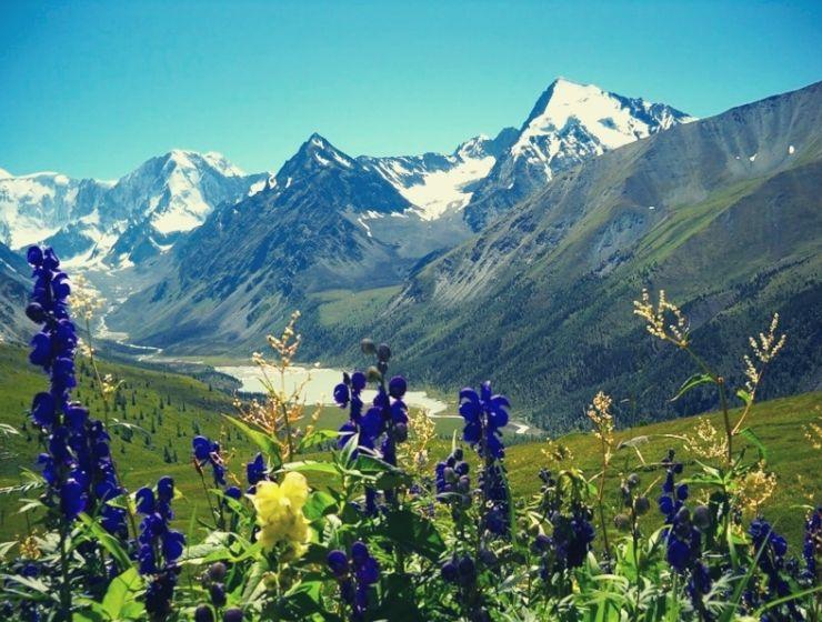Природа Алтая: самый чистый воздух, самый чистый мёд