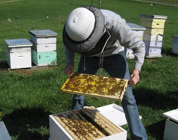 Подготовка и очистка ульев перед посадкой отводок пчел