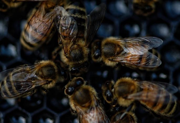 Пчелы во сне